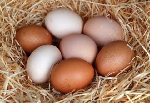 Everyday Specials - 700g Dozen Eggs $2.99